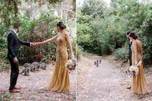 'Băng đảng' gấu mèo xuất hiện chớp nhoáng 'troll' cô dâu chú rể