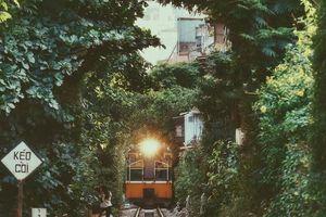 Khám phá đoạn đường tàu 'sống ảo' rợp bóng cây xanh thu hút giới trẻ Hà thành