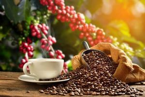Giá cà phê tuần qua (23 - 28/9): Giá trong nước và thế giới diễn biến trái chiều