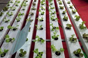 Sản phẩm nông nghiệp hữu cơ khó bán khi chưa được phân biệt rõ ràng