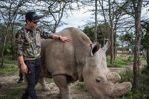 Cuộc thi cho những người yêu và muốn tìm hiểu về tê giác