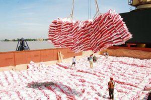 Giá gạo xuất khẩu thấp nhất trong 12 năm qua