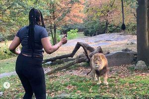 Cô gái nhảy vào chuồng trêu sư tử ở New York