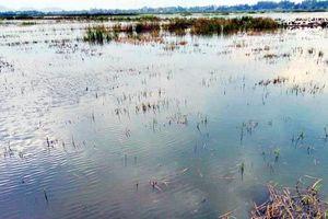 Nông dân gặp khó vì ruộng đồng ngập úng