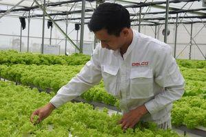 65 doanh nghiệp xin chủ trương đầu tư nông nghiệp công nghệ cao