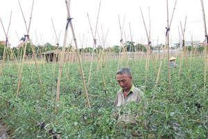 Tập trung phát triển nông nghiệp xanh