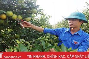 Ông chủ trẻ vườn cam 'thuận thiên nhiên' ở Hà Tĩnh