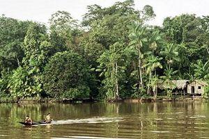 Những bí ẩn giật mình xung quanh rừng mưa Amazon