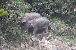 Cố gắng cứu nhau ở thác nước, 6 con voi hoang dã thiệt mạng