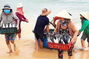 Biển gần bờ xuất hiện nhiều đàn cá, ngư dân Bình Định trúng lớn