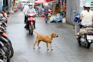 Chó thả rông đe dọa tính mạng người đi đường