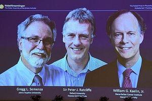 Giải Nobel Y học 2019 vinh danh nhóm 3 nhà khoa học nghiên cứu tế bào