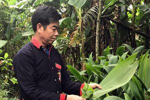Ba Vì: Người 'giữ lửa' nơi bản Dao Yên Sơn