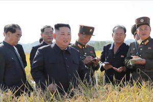 Ông Kim Jong Un đi thăm nông trường sau khi đàm phán Mỹ - Triều bế tắc