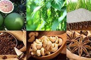 Chuỗi giá trị nông sản toàn cầu: Cơ hội cho chính doanh nghiệp và người dân