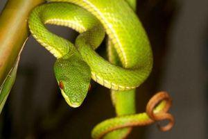 Người đàn ông ở Hà Giang bị rắn độc cắn tử vong