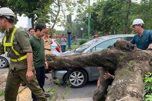 Hà Nội: Cây xanh bất ngờ bật gốc, đè vào ô tô đang đi trên đường Thanh Niên