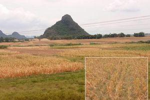 Thiếu nước nghiêm trọng, người dân Tân Kỳ đề nghị hỗ trợ xây đập