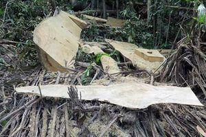 Phú Yên chỉ đạo sớm điều tra vụ rừng Hòn Đác bị phá