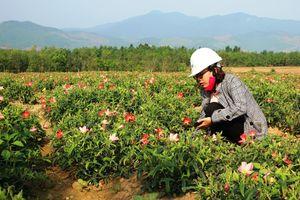 Quảng Bình: Tín dụng chính sách giúp người dân thoát nghèo