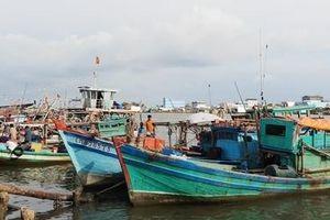 Cà Mau triển khai nhiều biện pháp khai thác thủy sản bền vững