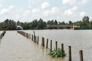 Nhiều cọc dừa bất thường ở sông Cổ Chiên gây chìm ghe lúa