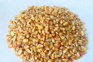 Cách làm bột ngũ cốc cho người tiểu đường