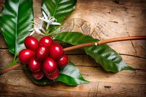 Cà phê Việt trải qua tuần giao dịch trầm lắng