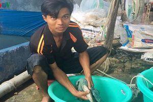 Hậu Giang: Thu nhập cả tỷ đồng mỗi năm từ mô hình ương giống cá chạch lấu