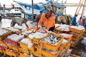 Quyết liệt gỡ thẻ vàng cho thủy sản xuất khẩu