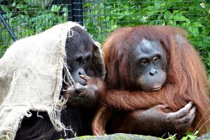 Se lạnh, động vật co ro sưởi ấm cho nhau 'yêu hết nấc'