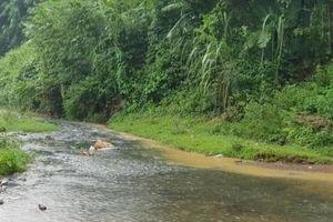 Bước đầu xác định nguyên nhân nước sạch sông Đà có mùi lạ
