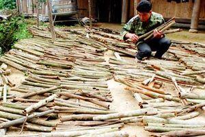 Lào Cai: 'Cây tiền tỷ' làm đổi thay cuộc sống người dân Nậm Đét