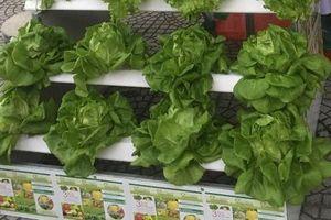Đà Nẵng: Gần 11 tỷ đồng đầu tư mô hình sản xuất nông nghiệp ứng dụng công nghệ cao