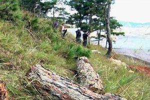 Công an mật phục nhiều ngày, tóm gọn nhóm người phá rừng thông Đà Lạt