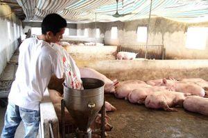 Mê Linh xử phạt 10 trường hợp giết mổ lợn nghi bị bệnh dịch tả châu Phi