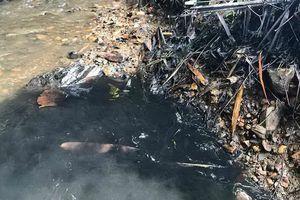 Nước sạch sông Đà có mùi lạ: VIWASUPCO âm thầm xử lý?