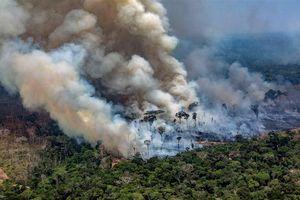 Điều gì sẽ xảy ra nếu rừng Amazon bị cháy rụi hoàn toàn?