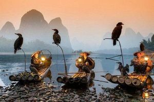 Ấn tượng nghệ thuật câu cá trên sông... bằng chim cốc tồn tại 1.300 năm