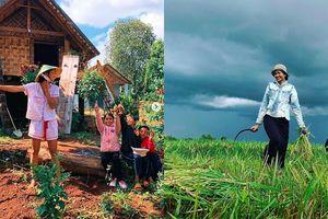 H'Hen Niê bình yên đi làm vườn, gặt lúa ở quê nhà sau hàng loạt tin đồn