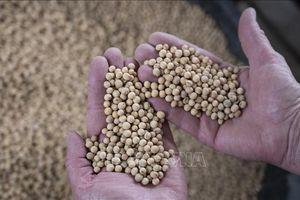 Nông dân Mỹ trông đợi thỏa thuận mua nông sản của Trung Quốc