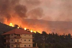 Liban đang trải qua thảm họa cháy rừng tồi tệ nhất trong nhiều thập kỷ