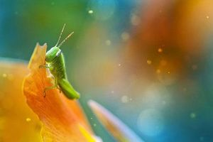 Ảnh đẹp xuất sắc về thế giới động vật nhỏ bé (phần 2)