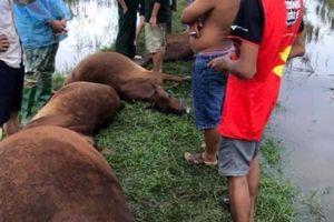 Sét đánh khiến một người nguy kịch, 6 con bò chết trên cánh đồng