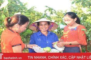 Ổi Đài Loan 'kết duyên' chị em Cẩm Lạc nhờ quả ngon, dễ trồng