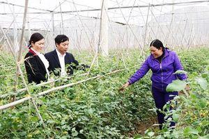 Bắc Giang: Điểm sáng nông thôn mới ở Việt Yên