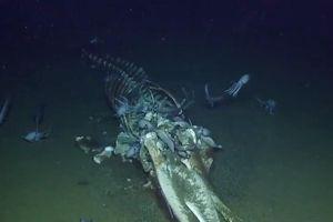 Nhóm thám hiểm phát hiện xác cá voi gây xôn xao Internet