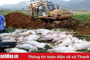Thực hiện nghiêm công tác hỗ trợ tiêu hủy lợn do mắc bệnh Dịch tả lợn Châu Phi