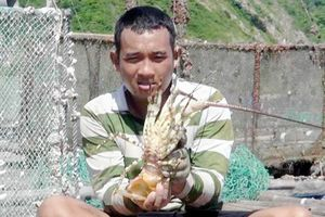 Người dân lao đao vì giá tôm hùm thấp kỷ lục