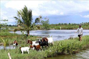 Khuyến khích nuôi dê tại những địa bàn khó khăn